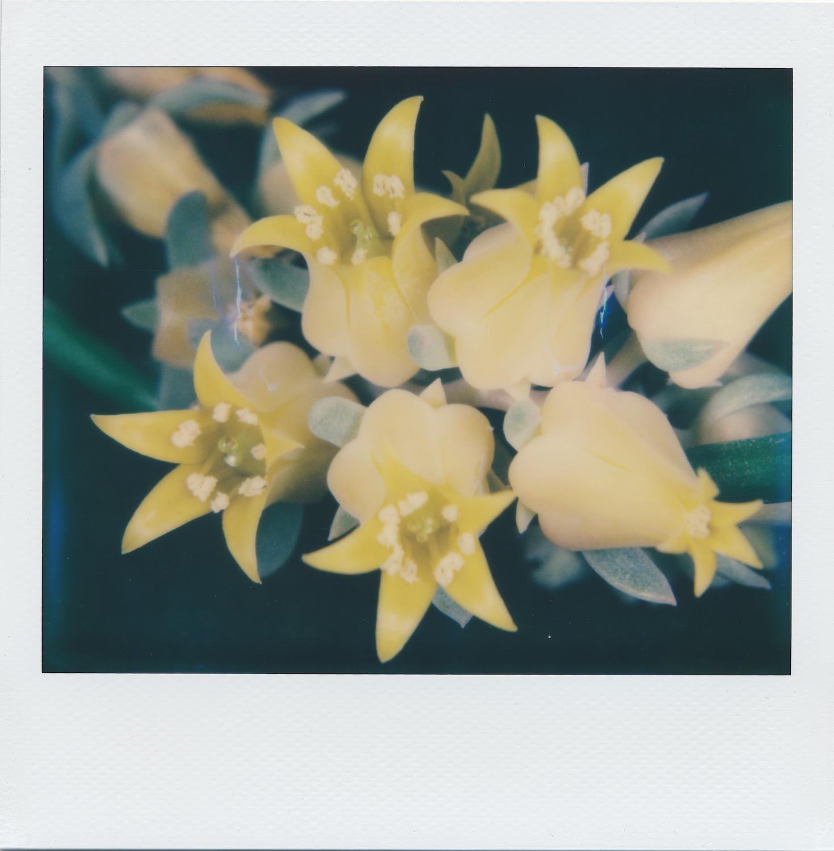 yellowcluster copy.jpeg