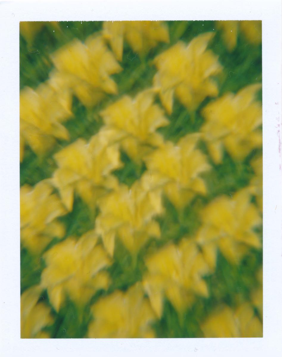 YellowLily.jpg