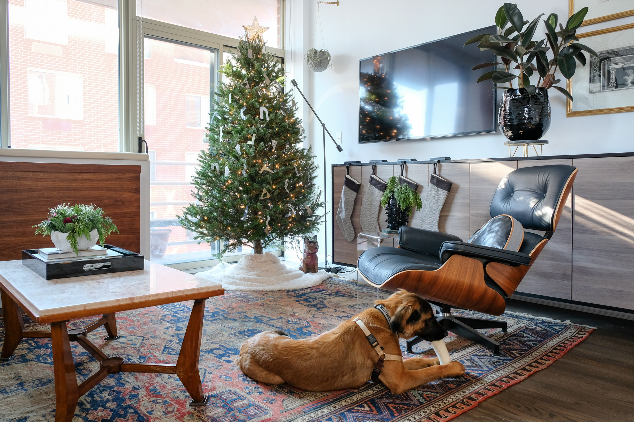 Christmas 2017 at #BKaptstory. It was our puppy  Ivy's  first Christmas!