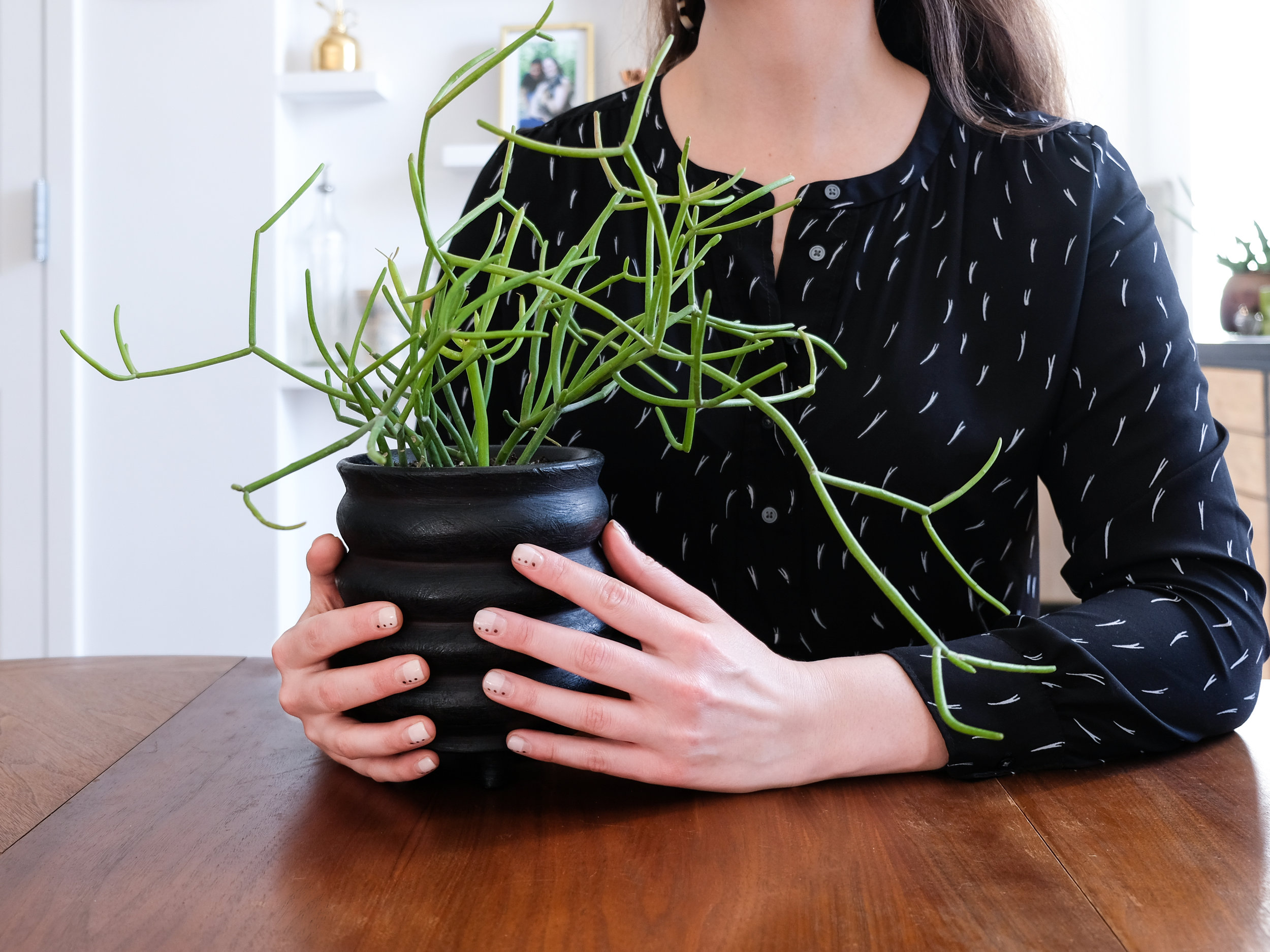 A current favorite planter from  CB2 .