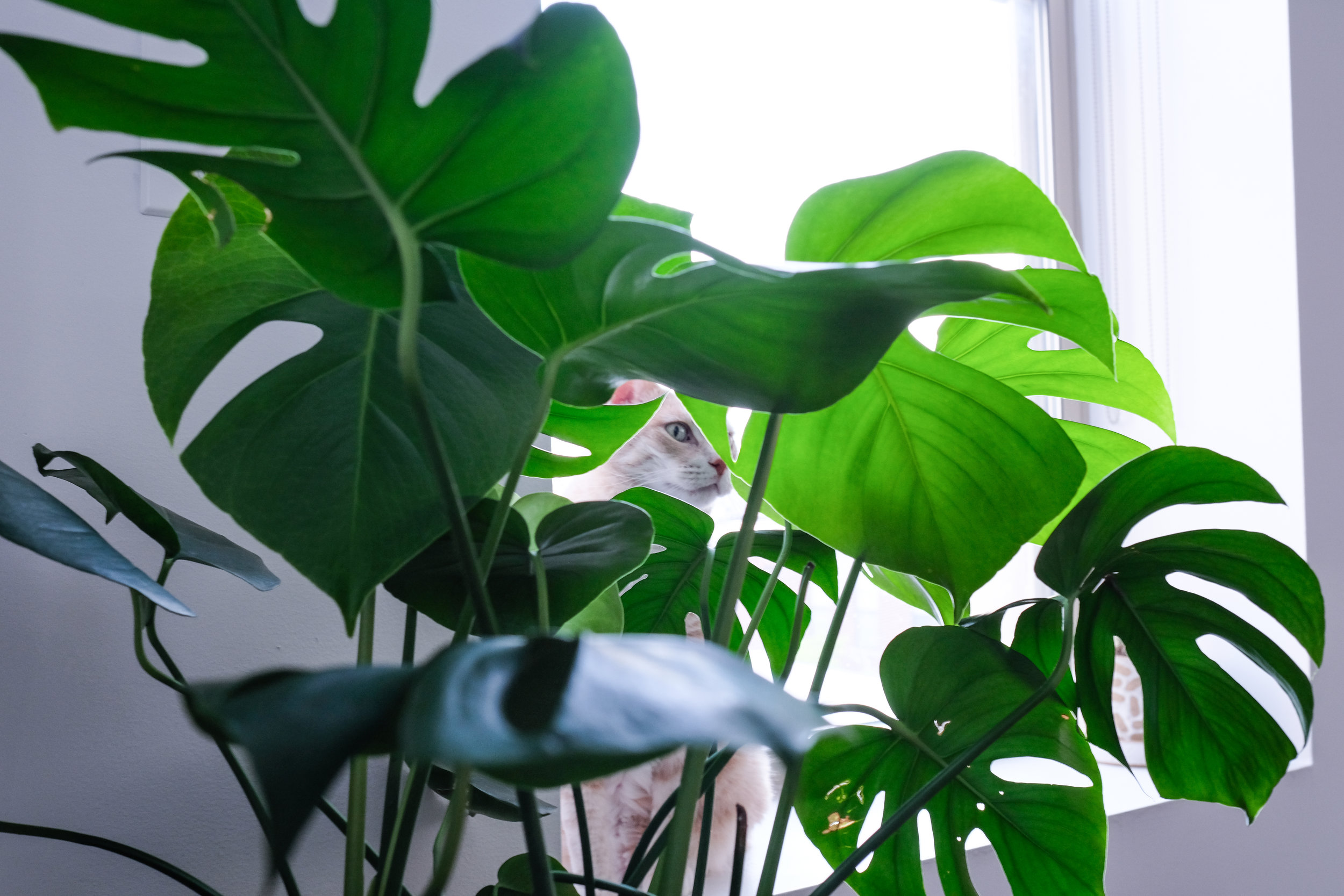 Just a boy and his monstera