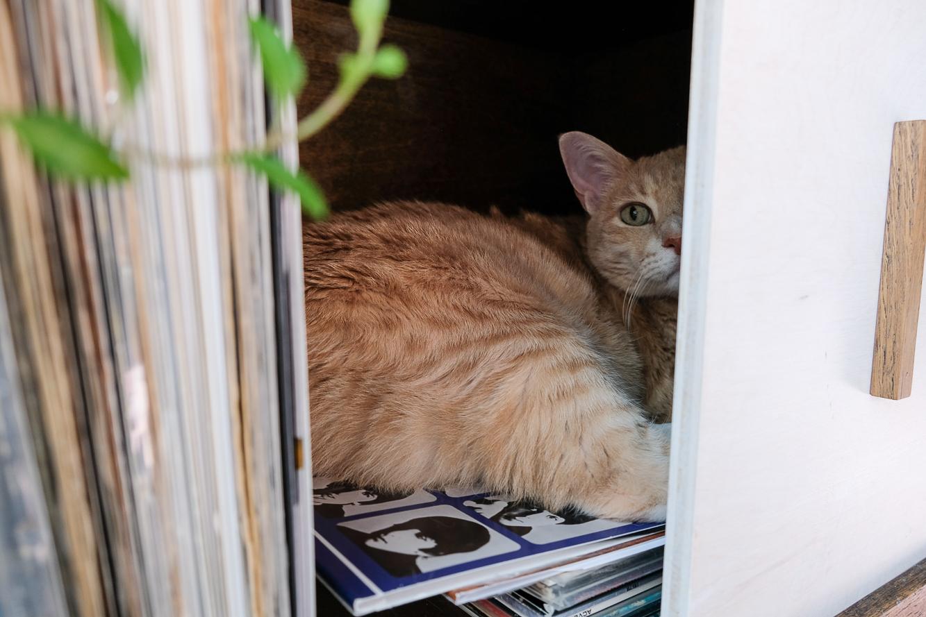 Ozzie's new hiding spot!