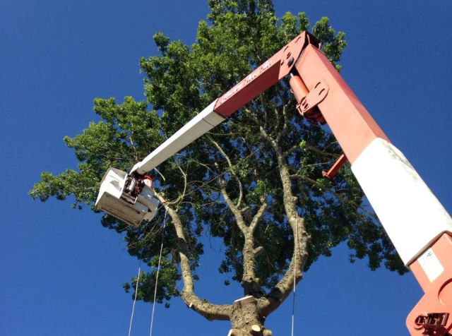 Our bucket trucks can go up 70 feet! Hope you're not afraid of heights!