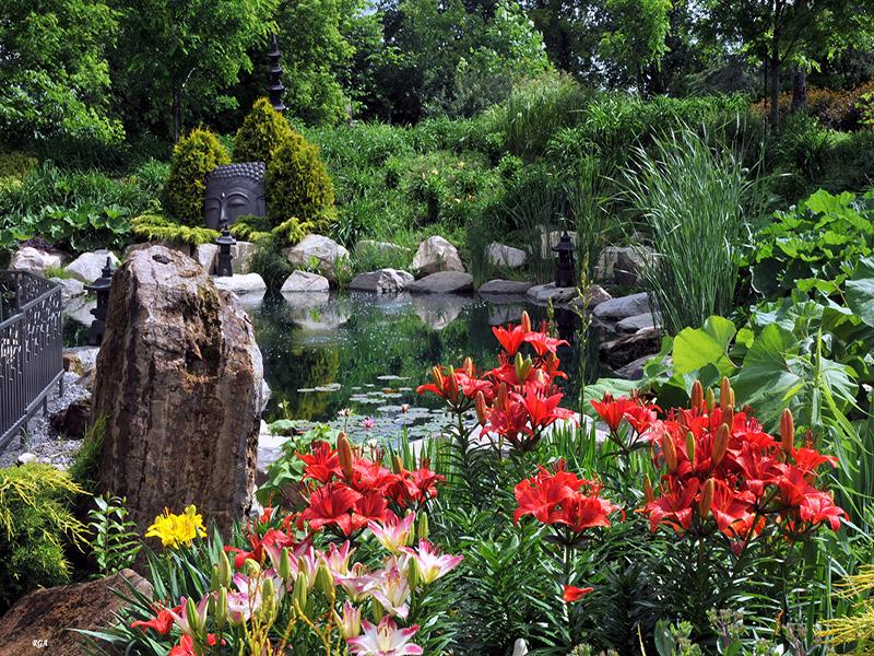 Bassin d'eau dans le jardin zen