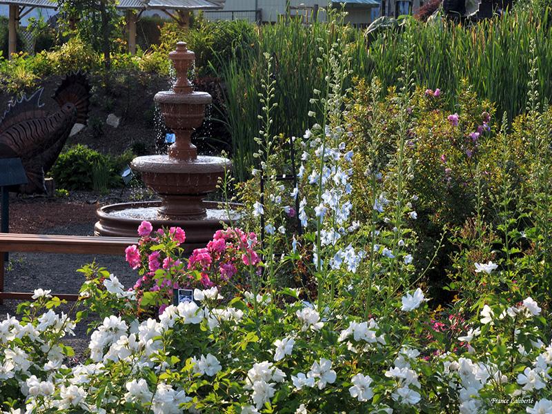 Fontaine, roses et delphiniums
