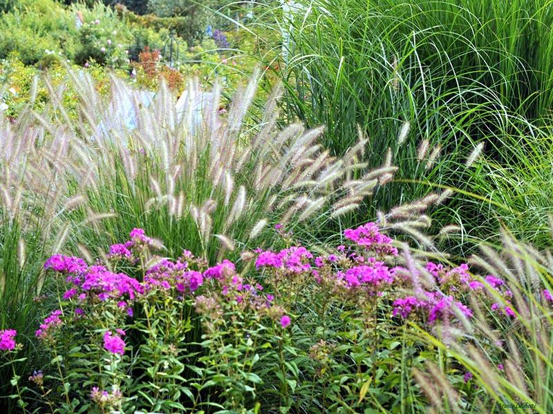 Le jardin des graminées ou jardin des 'Filles du Vent'