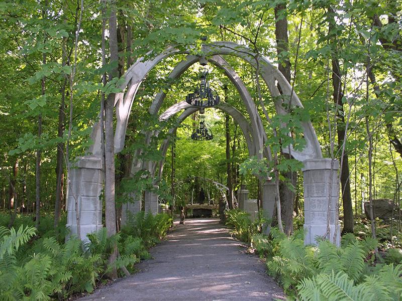Le jardin d'ombre en forêt