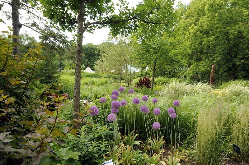 Jardin des graminées, autre vue.