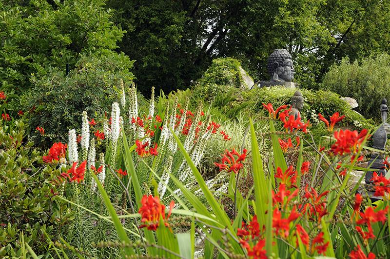 Tête de Bouddha, Crocosmia rouge et Liatris spicata 'Floristan White'