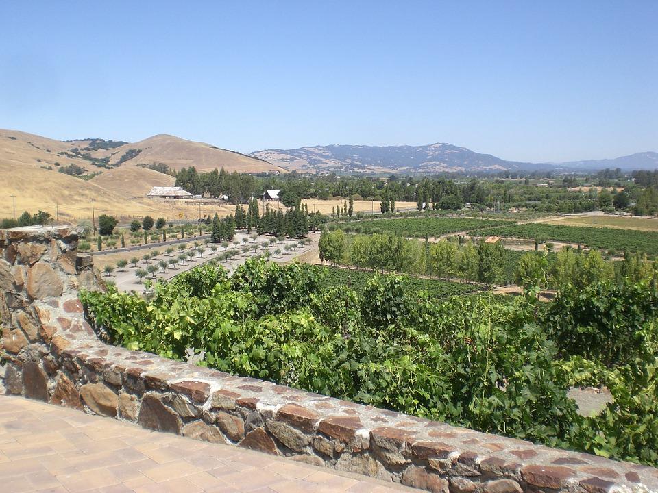 Vineyard in Northern California