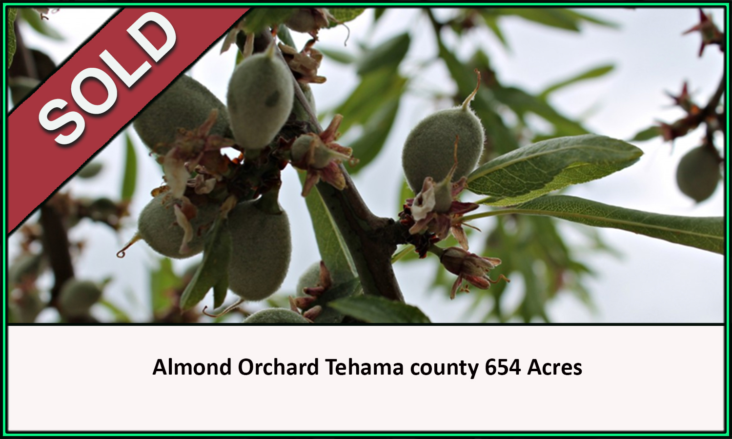 Almond Orchard Tehama County Sold