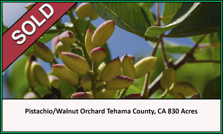 Pistachio Walnut Tehama County California Sold