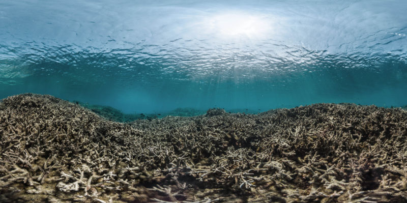 The effects of coral bleaching on a once healthy coral reef.
