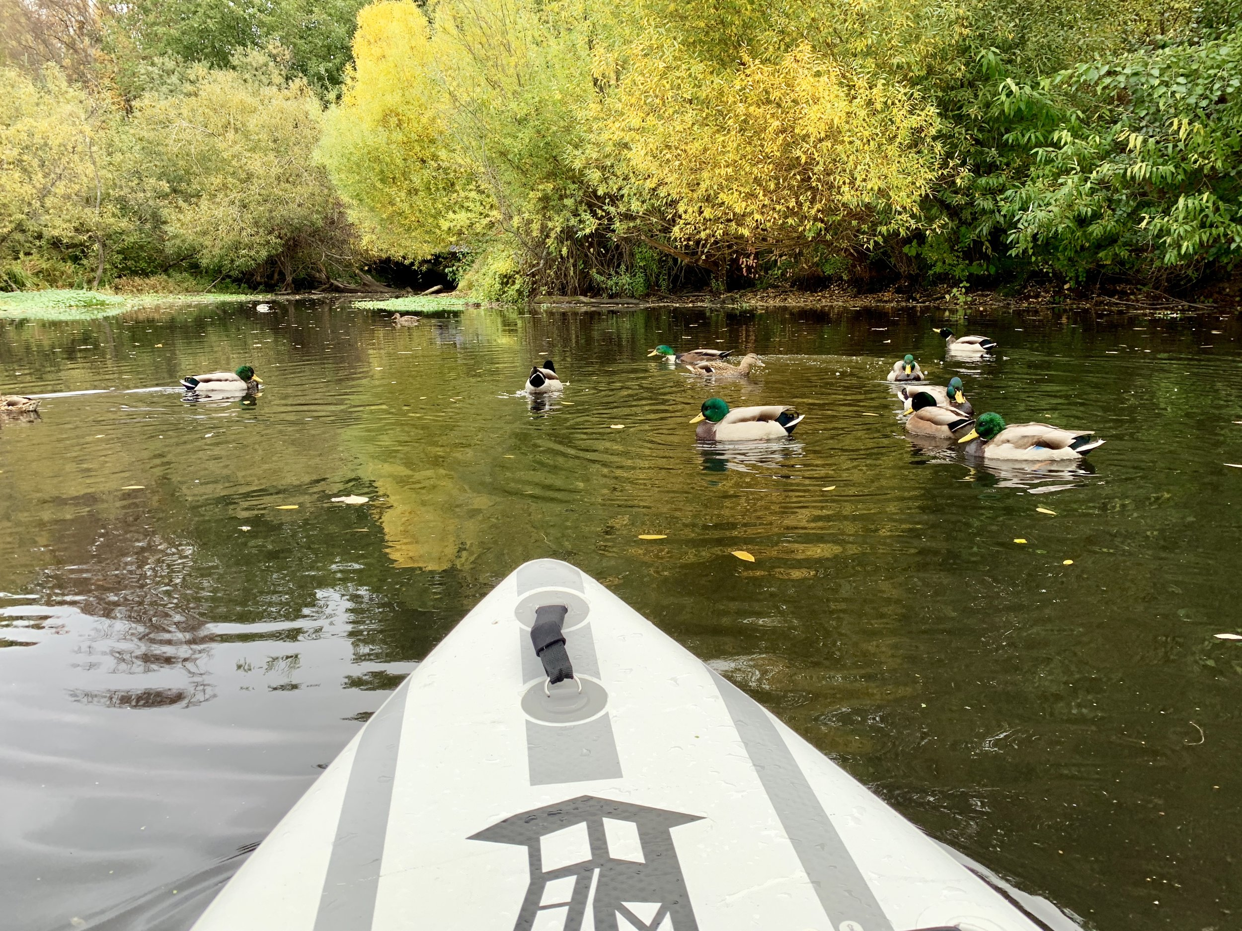 Paddling in Duck Bay at the Washington Park Arboretum