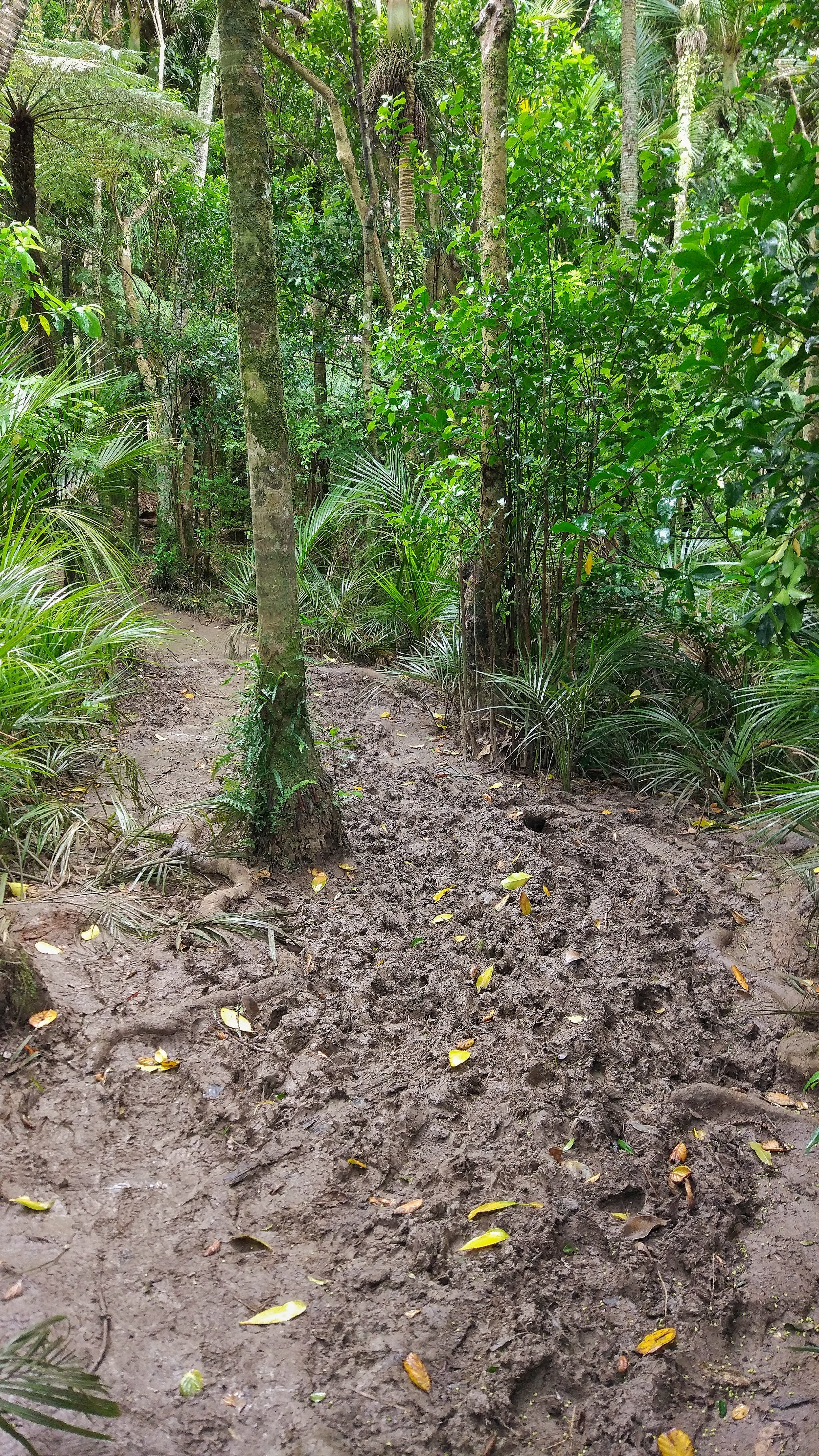 20171022_New_Zealand_Clevedon_scenic_reserve_mud.jpeg