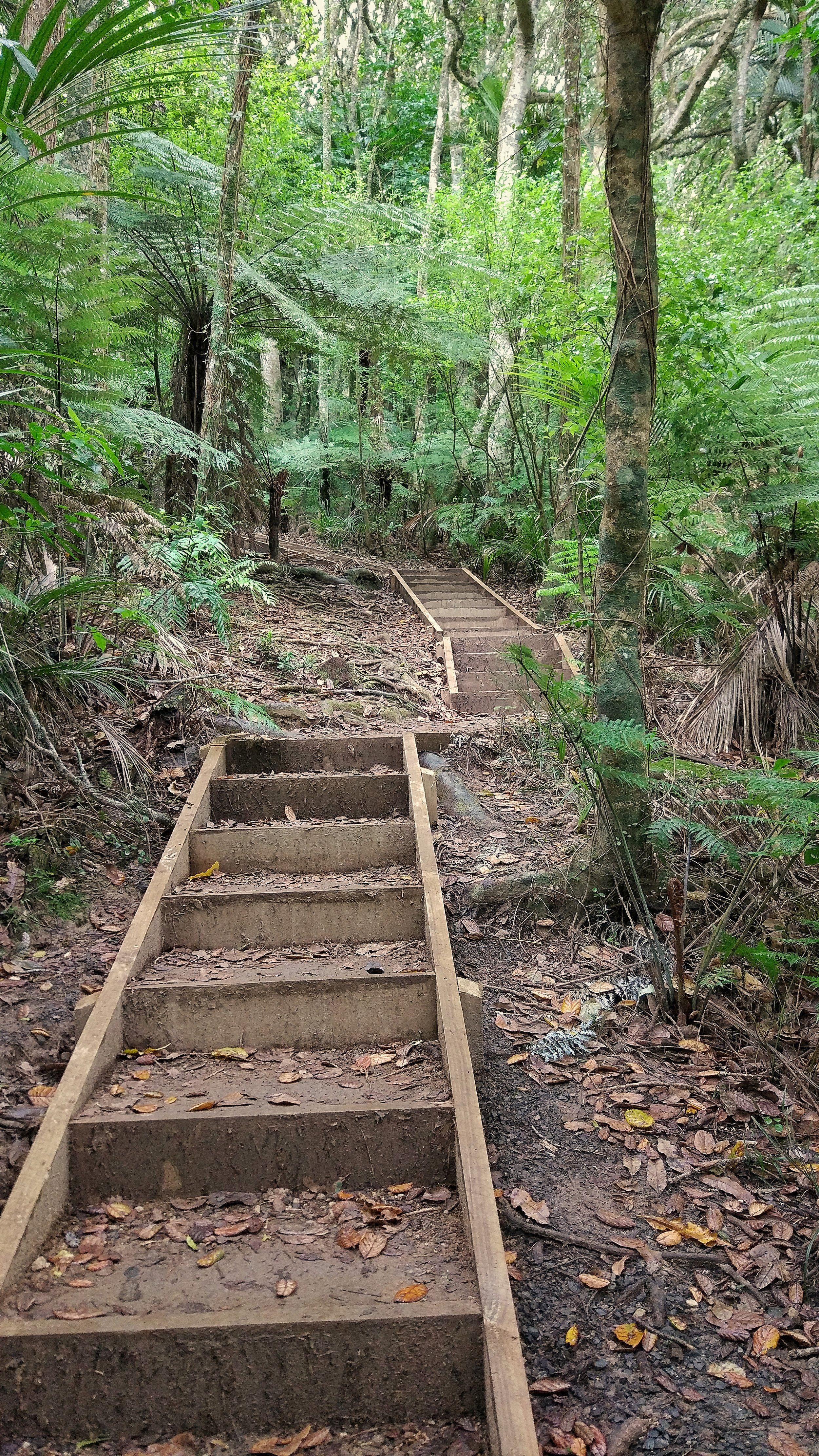 20171022_New_Zealand_Clevedon_scenic_reserve_stairs.jpeg