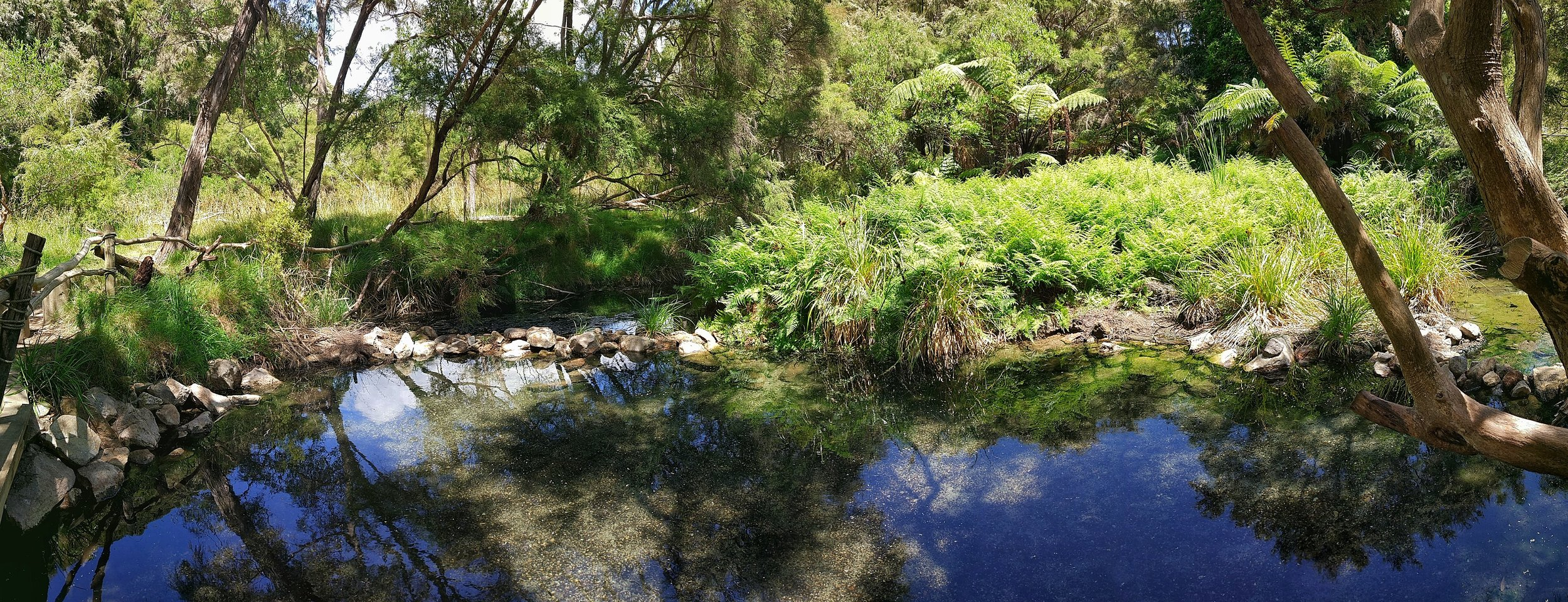 Hot Spring on the Tarawera Trail