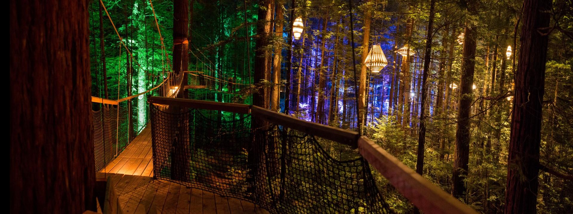 Magical nights at Treewalk Rotorua