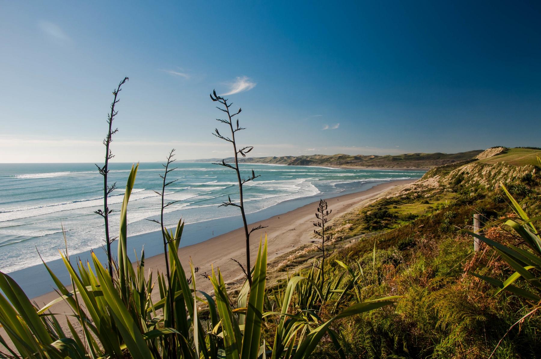 Those beaches are definitely worth the flight: Raglan