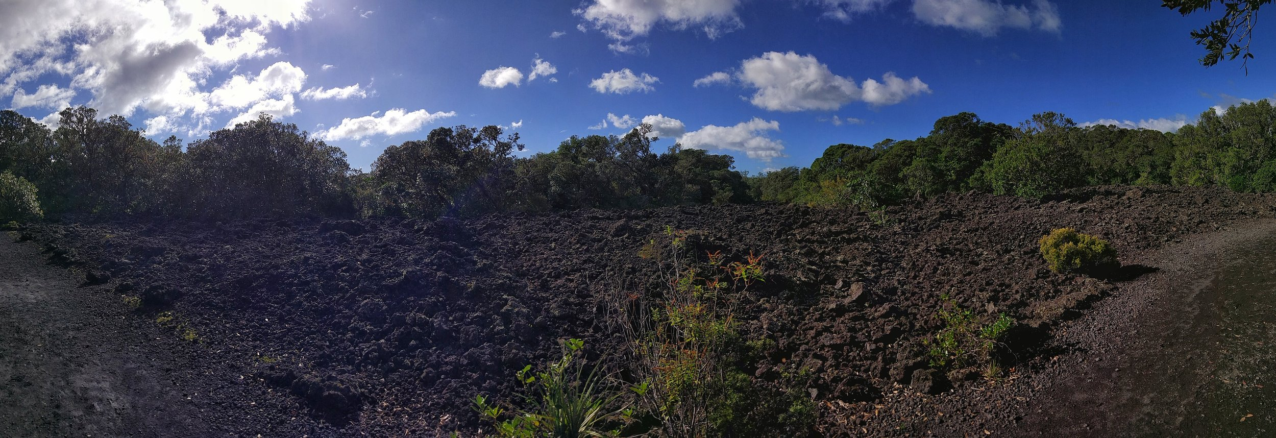 The lava fields on Rangitoto look a lot more impressive in real life, promise!