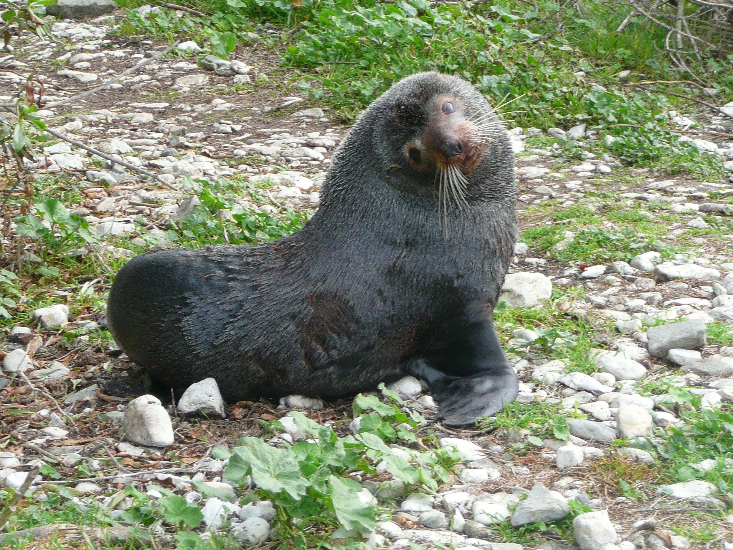 Quite the photo Model - kaikoura seal colony
