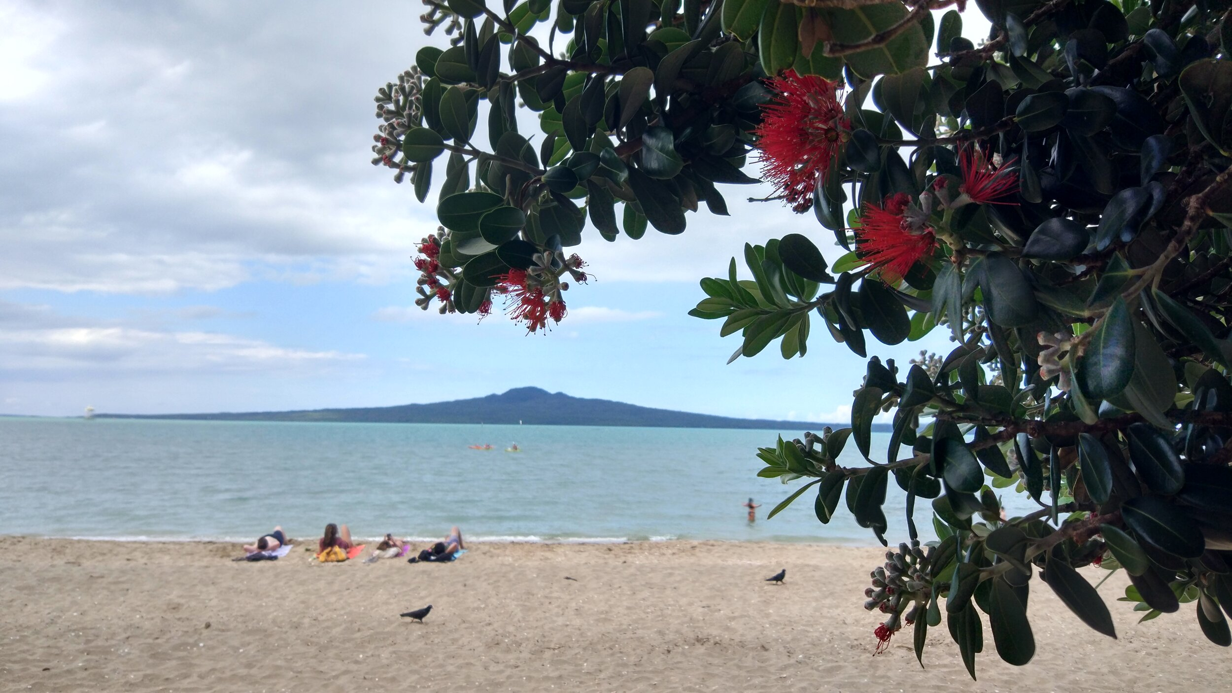 relaxing on mission bay beach Auckland