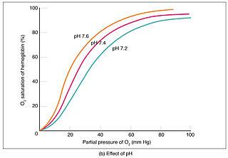 2323_Oxygen-hemoglobin_Dissociation-b.jpg