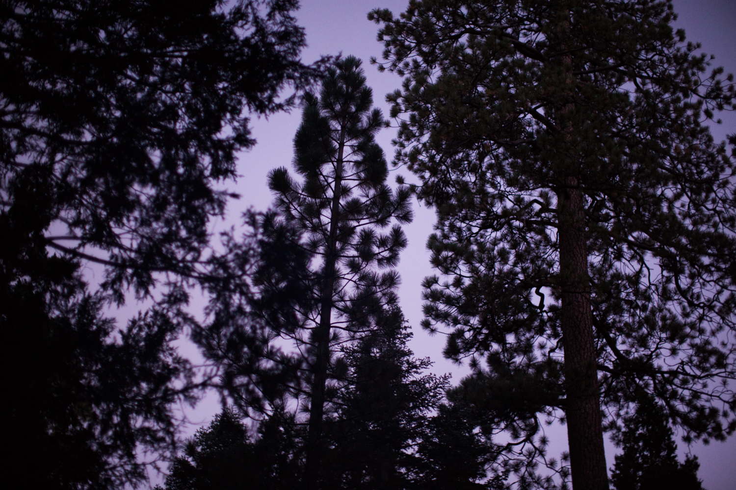 Peering up at the sky at dusk from my campsite. Angeles National Forest, California.