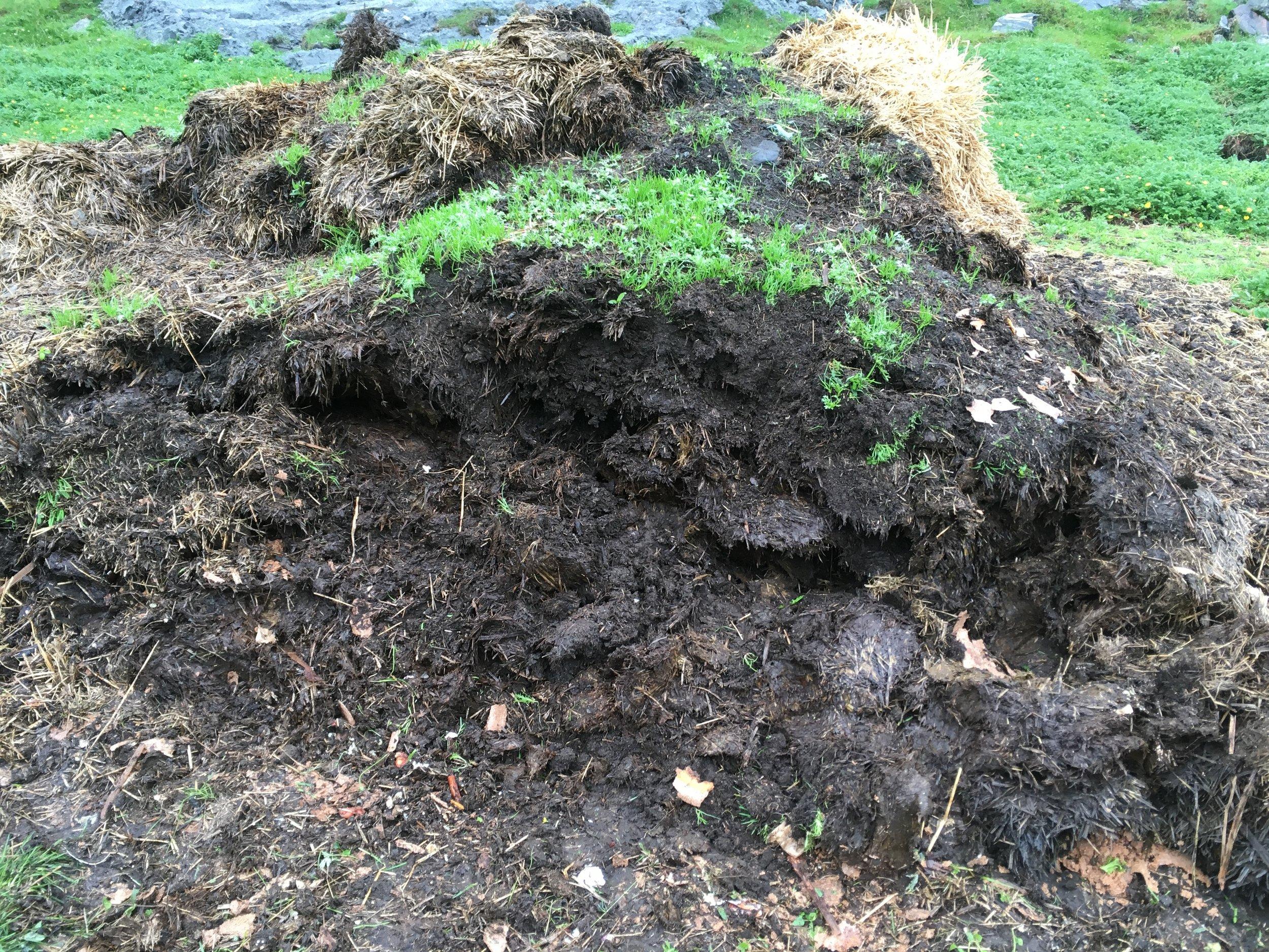 Fjorårets komposthar blitt til jord! -