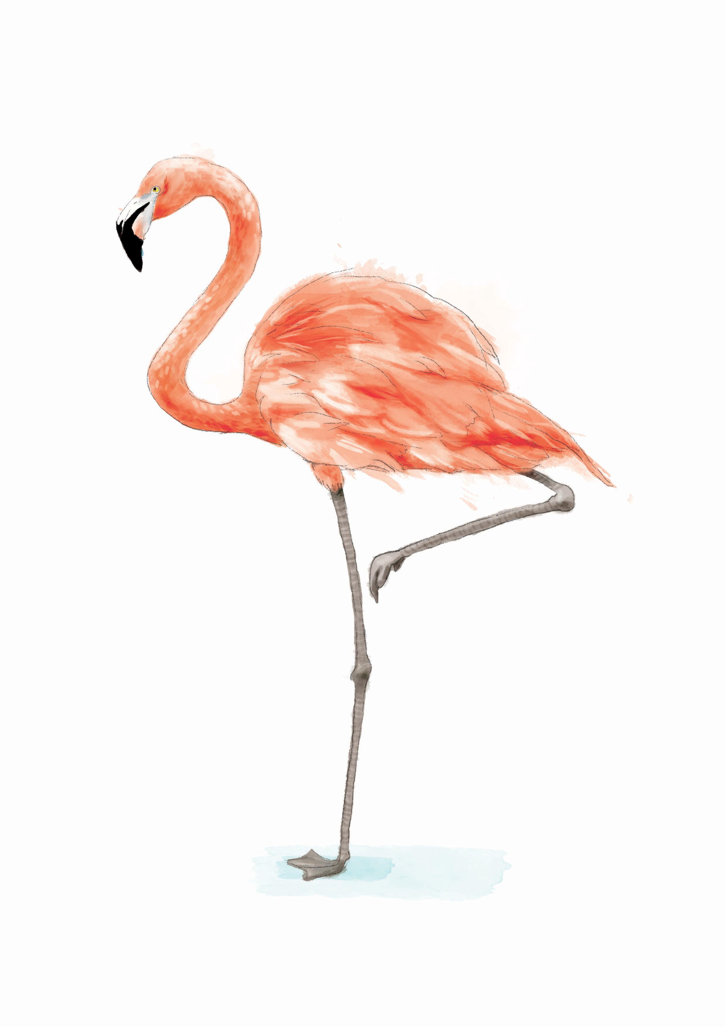 Flamingorgb.jpg