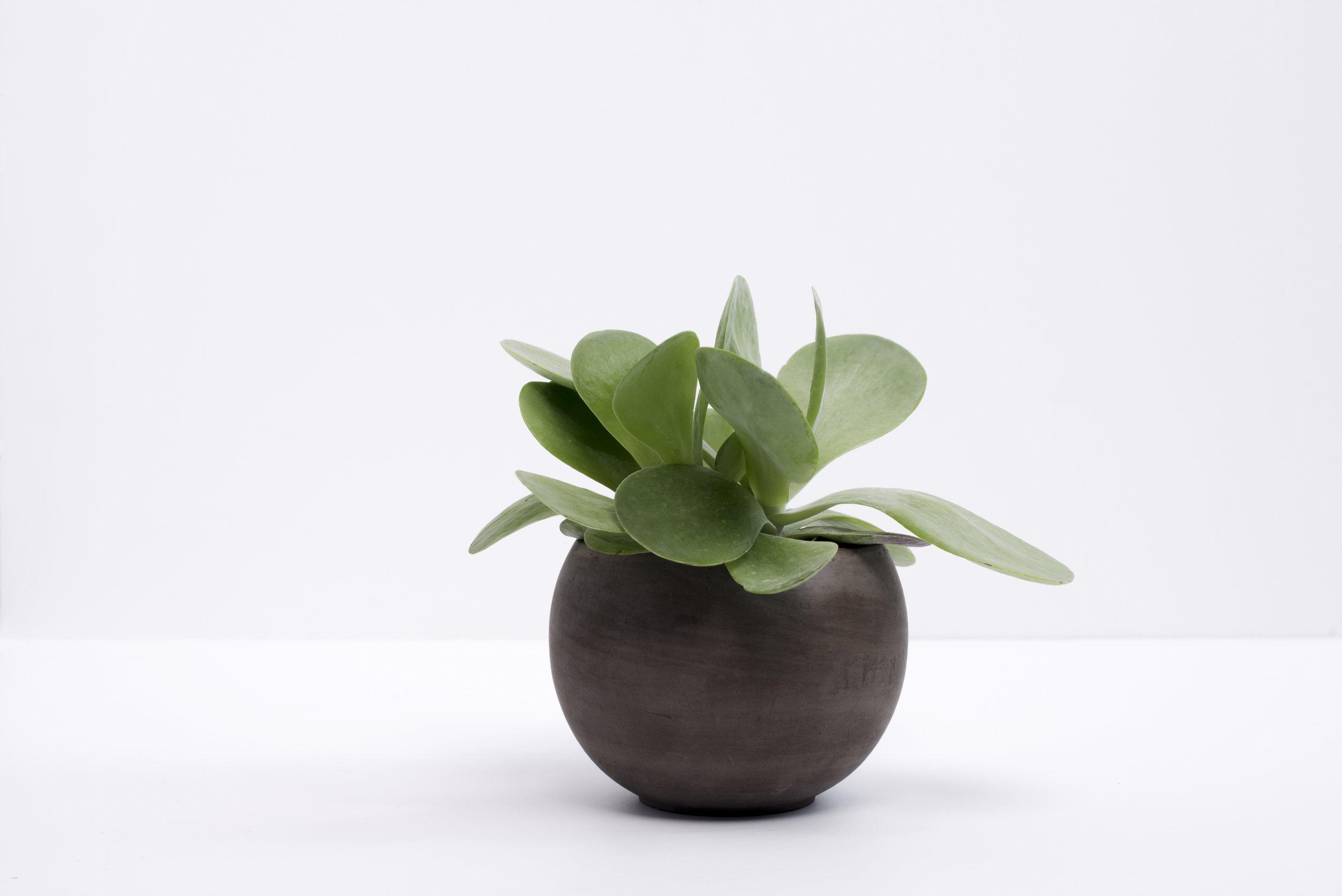 Succulent+2.jpg