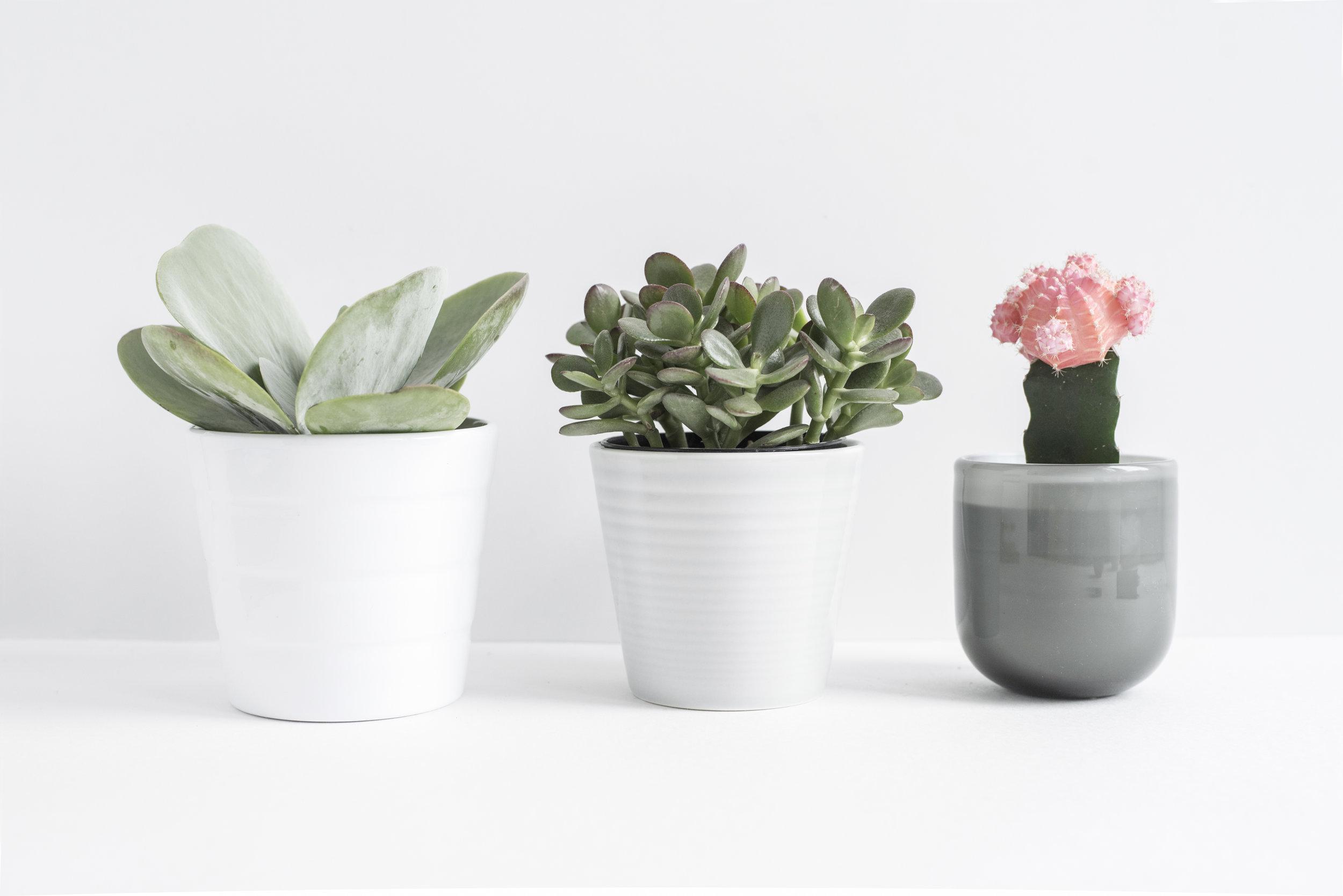 Three+Cactus-2.jpg