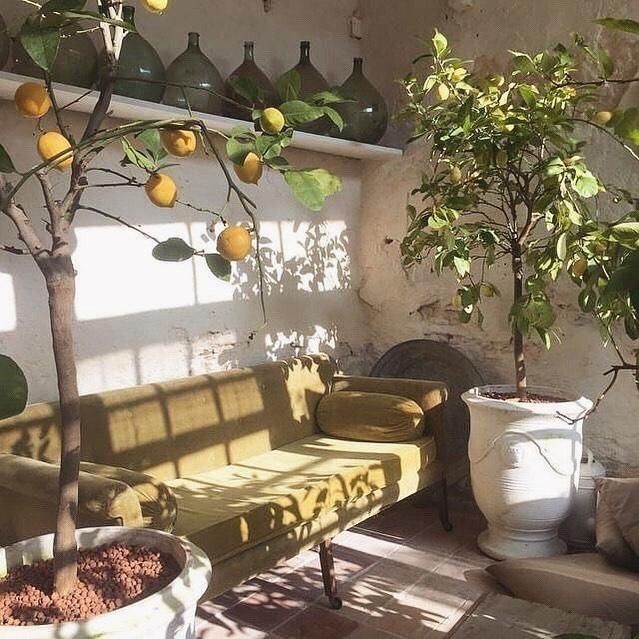 Citrus interiors 🍋 #goosethelabel