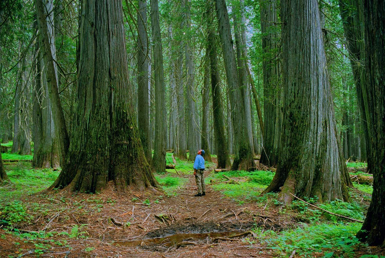 djd-in-cedar-grove.jpg