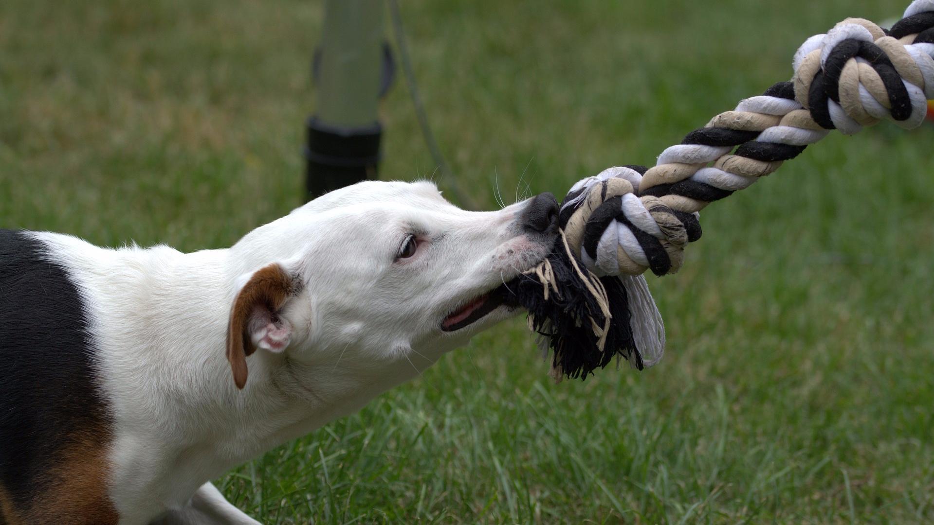 Dog Bites -