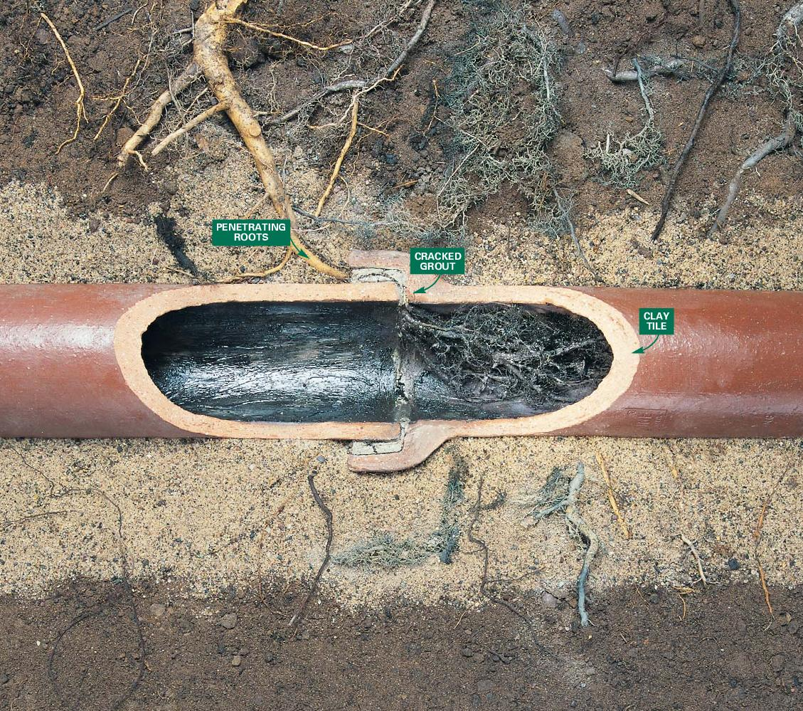 roots-in-vit-clay-sewer-pipe.jpg