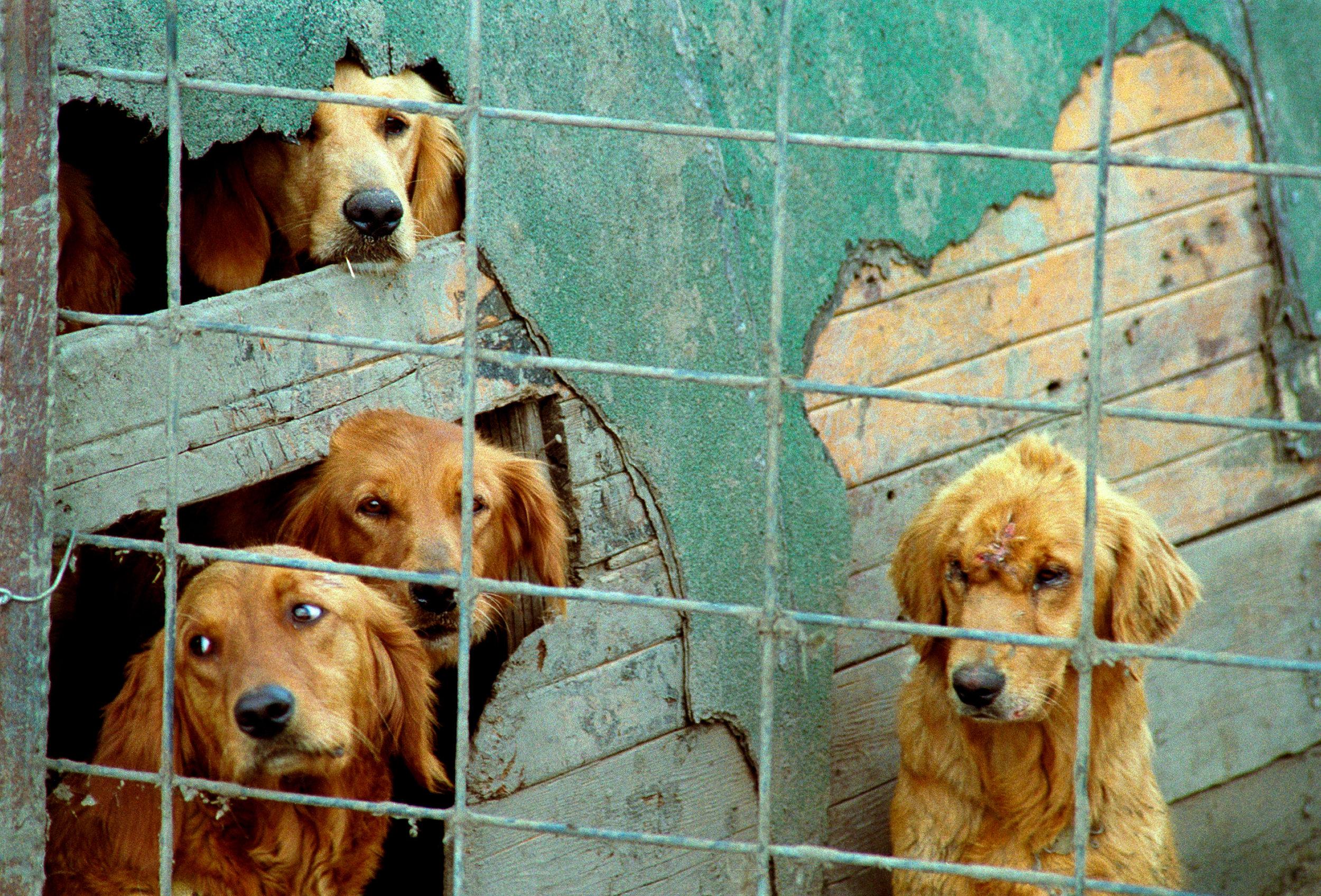 Puppy Mills — 1 Love 4 Animals