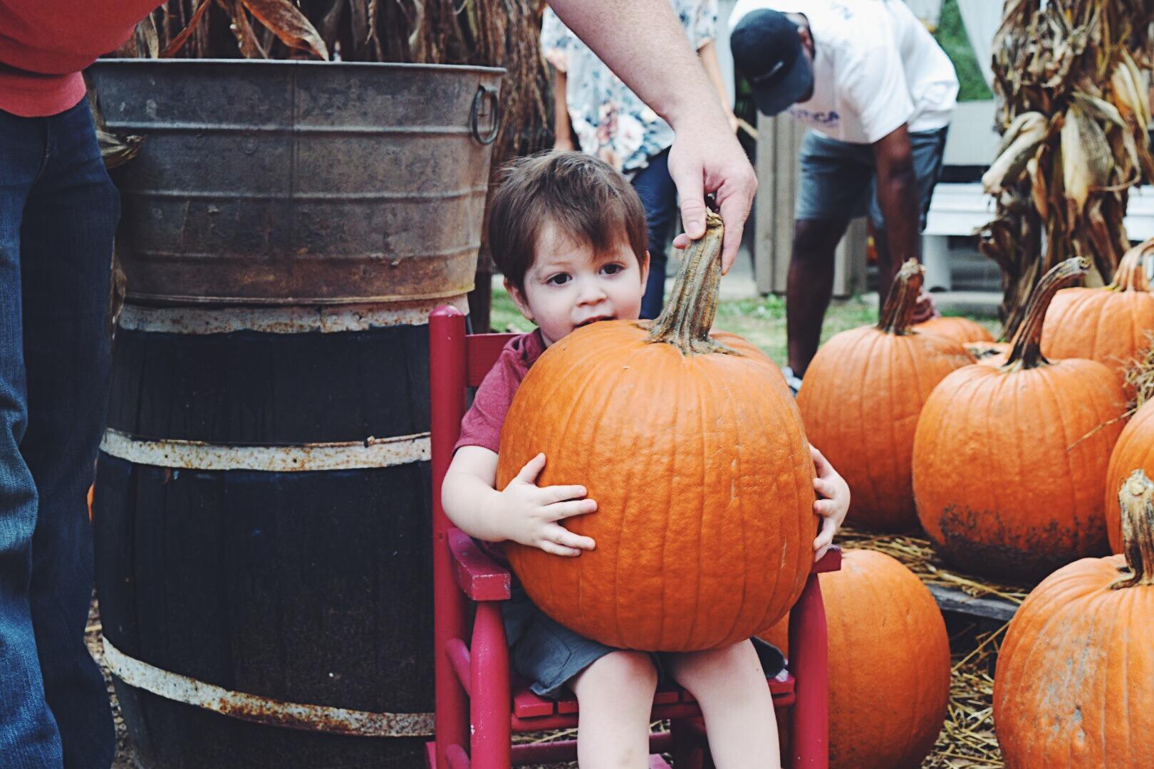 pumpkin6.jpg