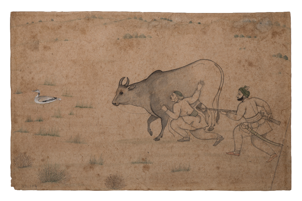 Balwant Singh shooting - Attributed to NainsukhLightly-tinted drawingAbout AD 1750–55Jasrota, Pahari, IndiaSir D. J. Tata CollectionCSMVS, MumbaiBalwant Singh, ruler of the Rajput Court of Jasrota, is shown here stealthily hunting a bird, perhaps a duck or a bustard, concealing himself behind a bull, which is held by its minder. Rather than just assuming the role of an artist who serves the interests of the court, Nainsukh's (about 1710–1778) talent and insight renders his patron Balwant Singh more of a muse. Here, he captures the intensity or Balwant Singh's gaze as he draws up his gun to shoot.