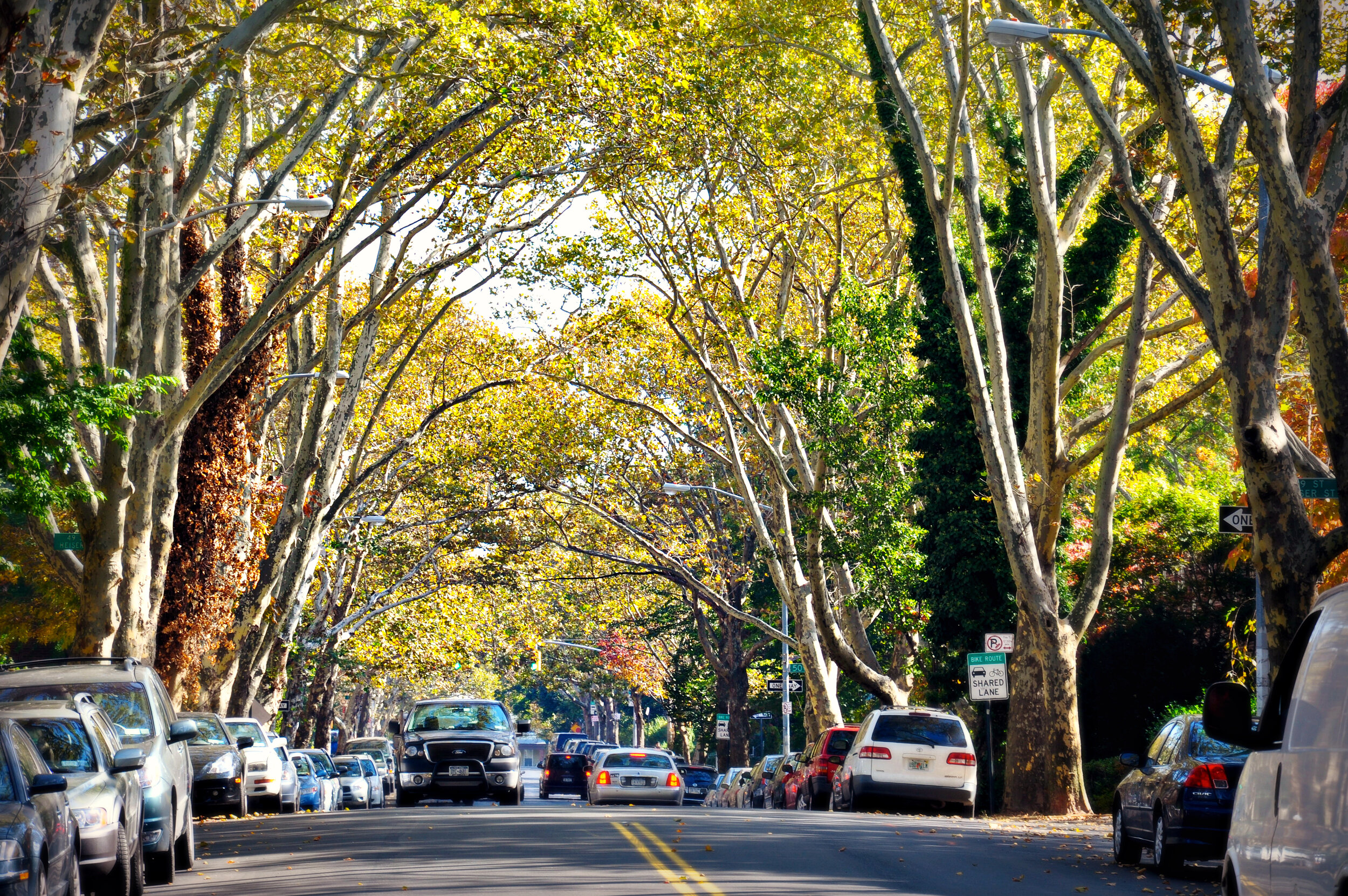 YEP this is basically NYC. You CAN have that tree life and that city life in Queens! Photo Cred: @annpricephoto