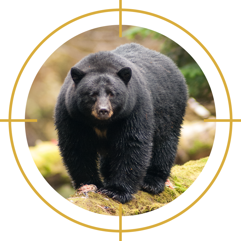 Conservation officers killed    1,872 black bears    between 2014 and 2018.