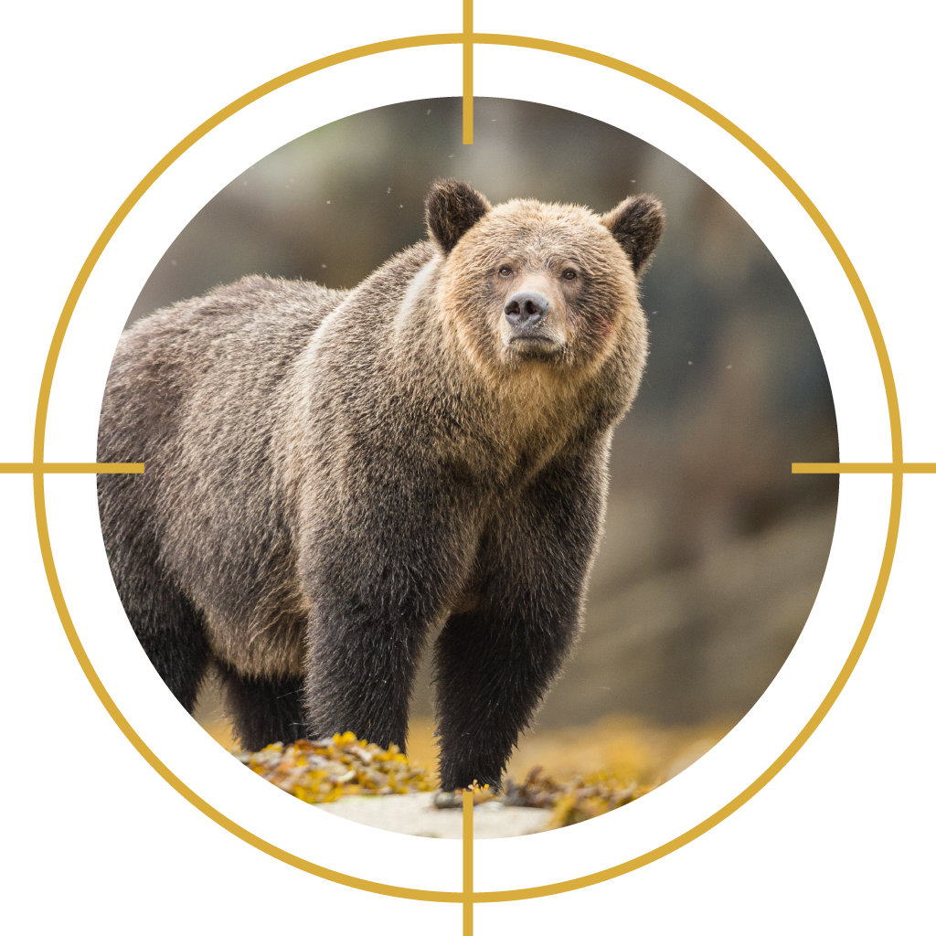 Conservation officers killed    72 grizzly bears    between 2014 and 2018.