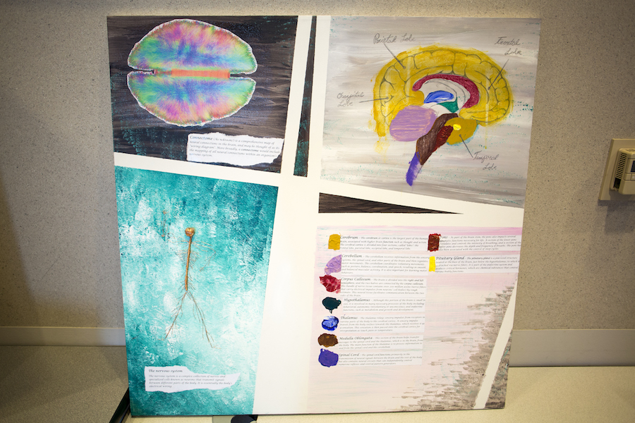 OLA Fellow creates visual maps of the Connectomes in the brain and the nervous system to show the biological connections to neuroscience.