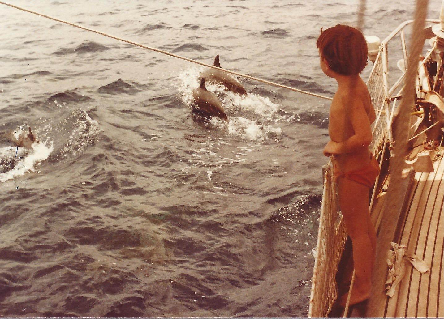 7.dolphins.jpg