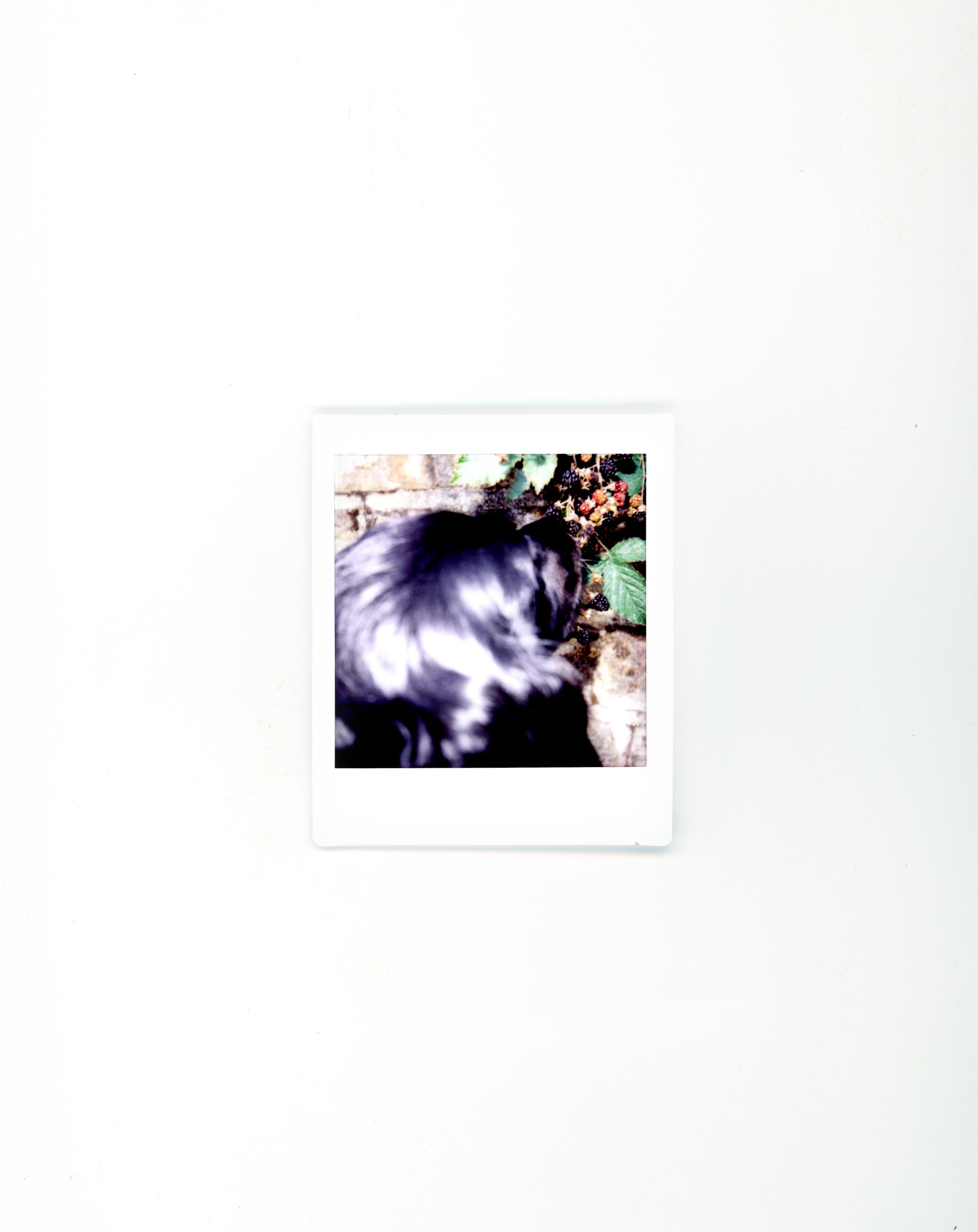 polaroids-13.jpg