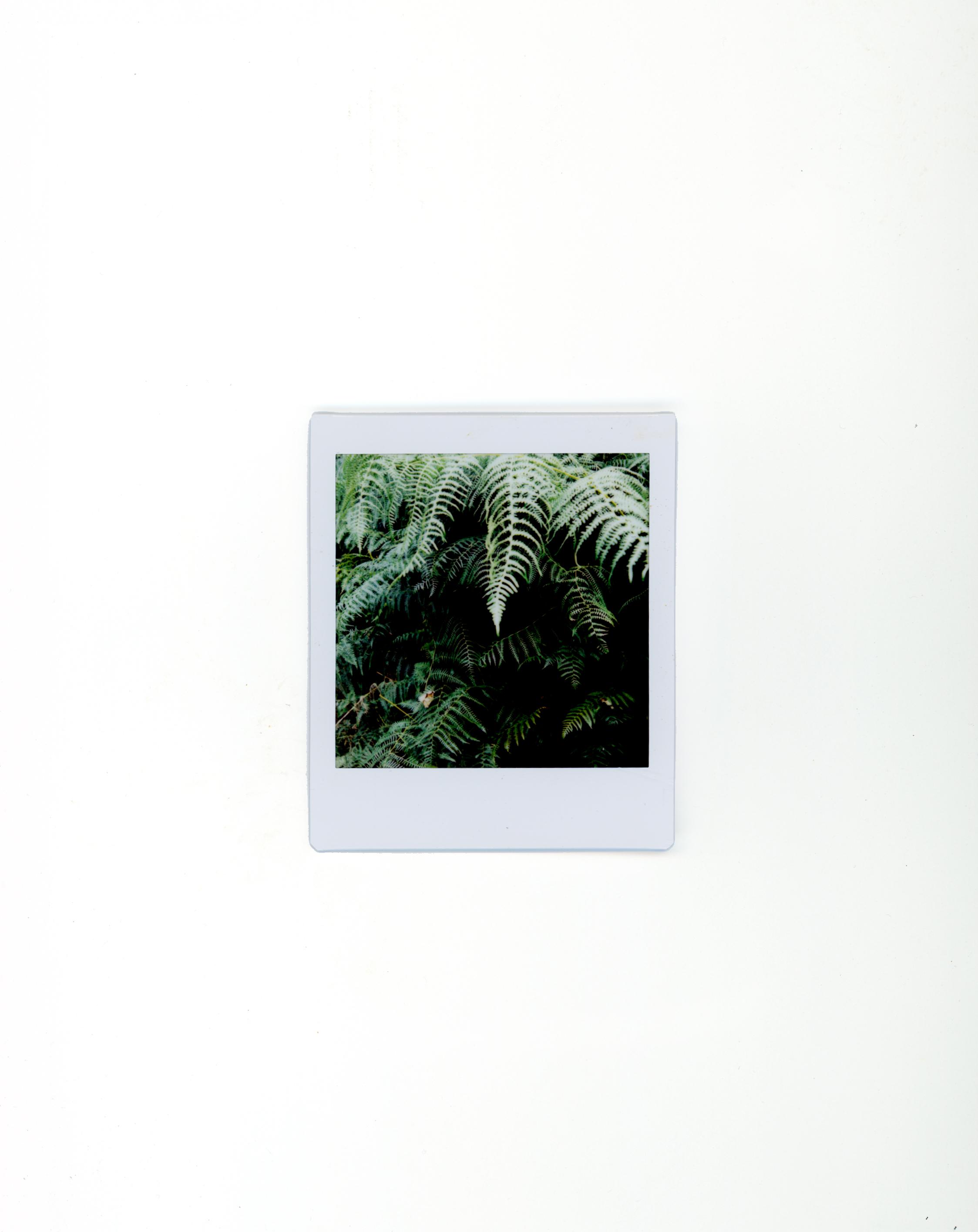 polaroids-15.jpg