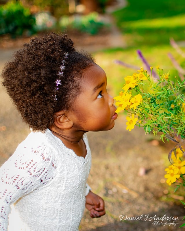 Little R smelling the pretty flowers . . . .  Client: Little R Parents: @rahsaanandkristaadopted Photo by: Me  Photographer Instagram: @danieljandersonphotography 📷DM to book a session 📷  #portraitphotography #2ndbirthday #turning2 #portraitphotographer  #naturallighting #shinnhistoricalpark #naturallightphotography #suburbanphotography #fun #creative #bayareaportrait #individualportrait #bayarea #nikon #fallseason #outdoorsphotography #nature #cosplay #cosplayer  #kidslide #Halloween #halloweencostume #nikond5600 #bayareaphotographer