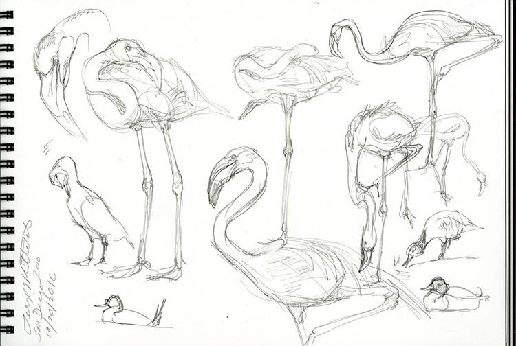 flamingo_sketch_from_san_diego_zoo.jpeg