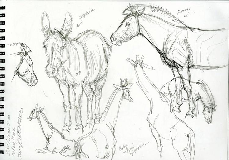 giraffe_and_zebra_sketch_from_san_diego_zoo.jpeg