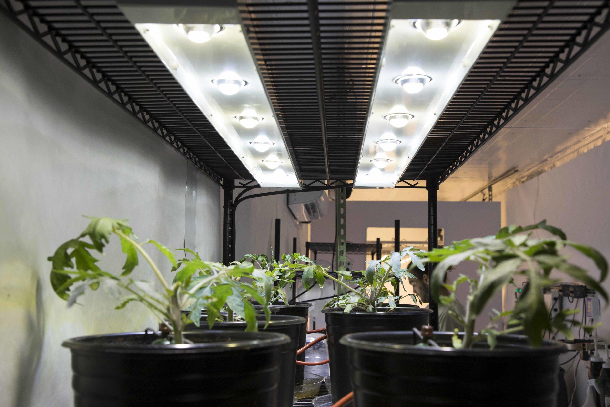 ReLi grow lights at Imagination International warehouse